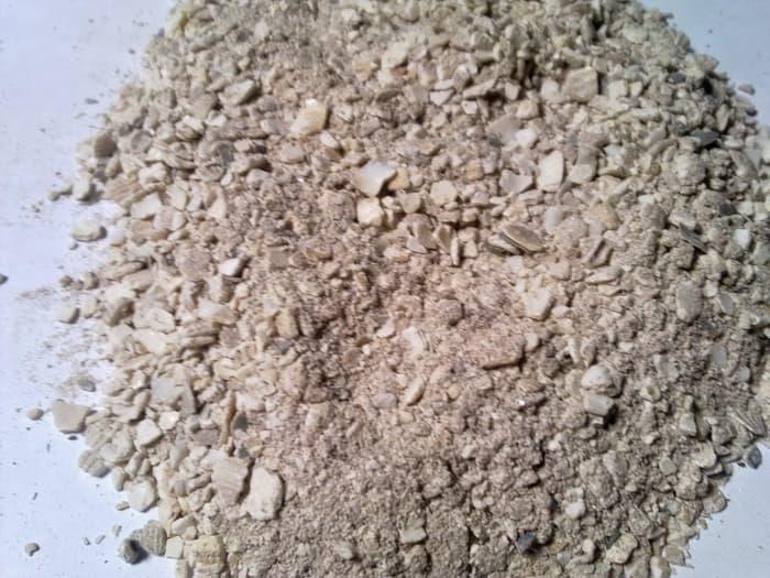 tepung keong emas untuk bebek petelur