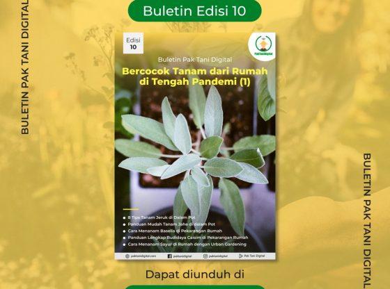 Cover Buletin Edisi 8 Pak Tani Digital