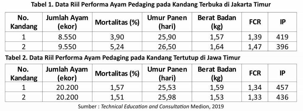 tabel performa ayam pedaging pada kandang terbuka