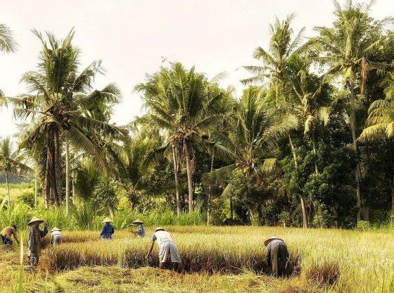Berlatih Bertani di Tengah Pandemi