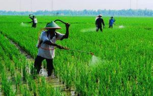 fungisida oleh petani