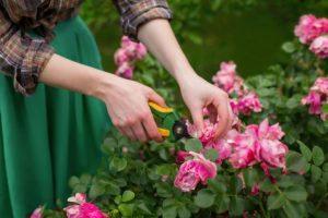 gambar-bunga-dirawat