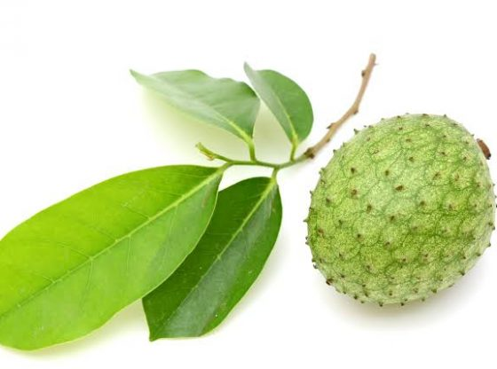 daun dan buah sirsak